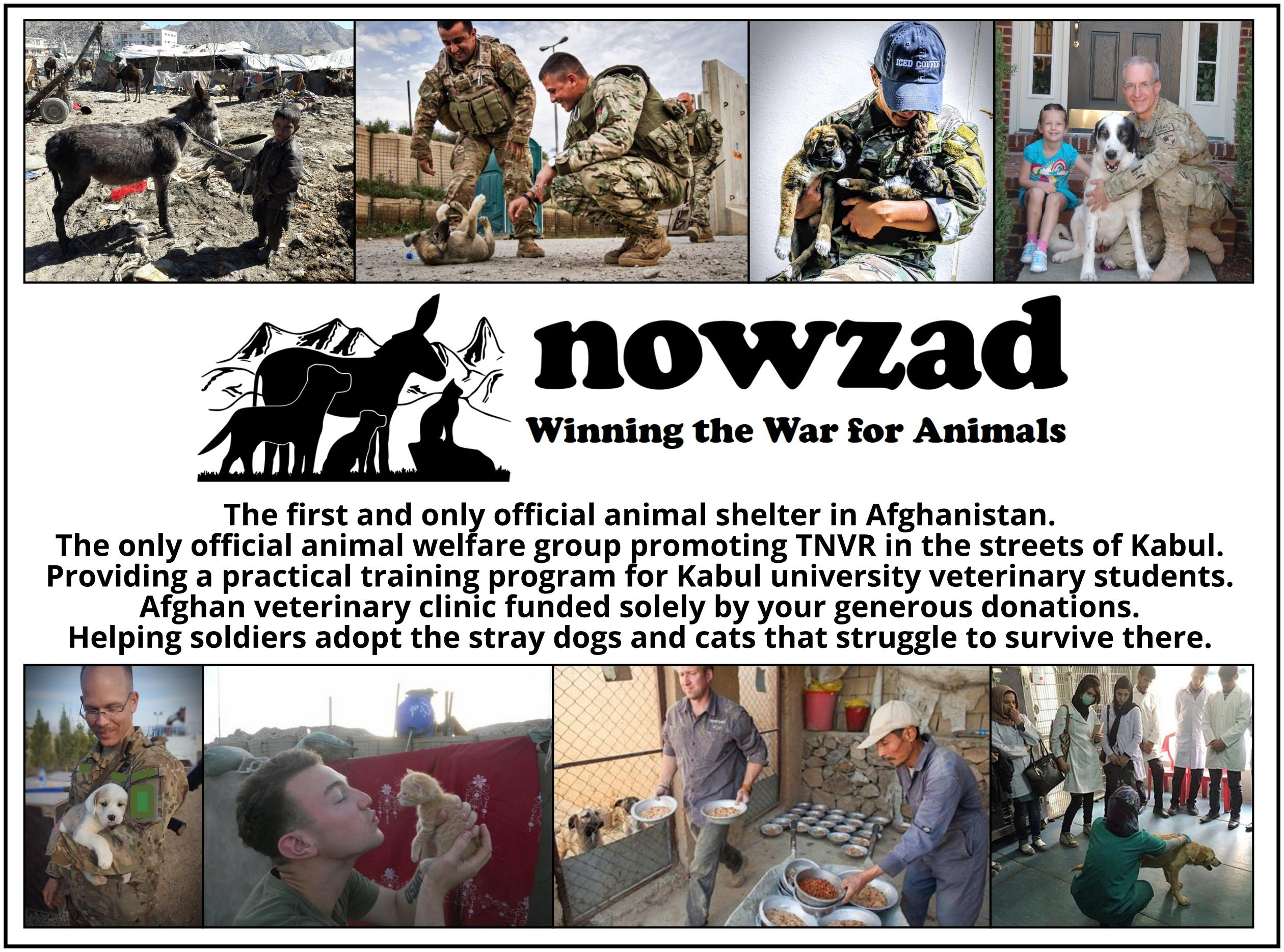 Nowzad ad banner